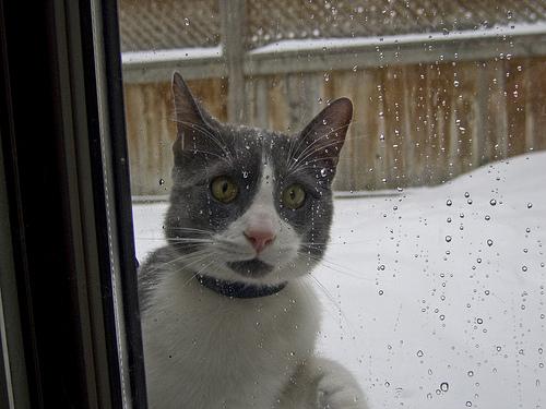 snow cat photo